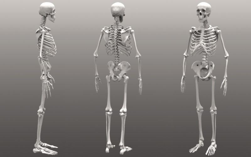 rangka tubuh gerakan shalat