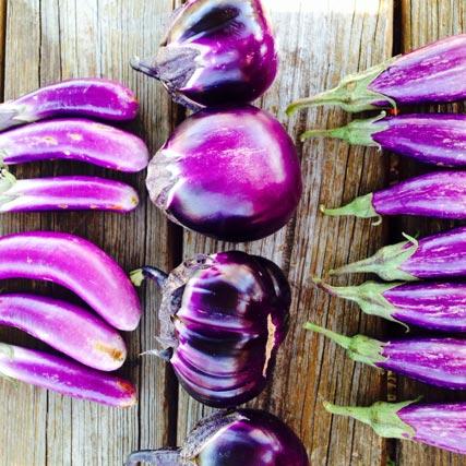 Farm Focus: Eggplant