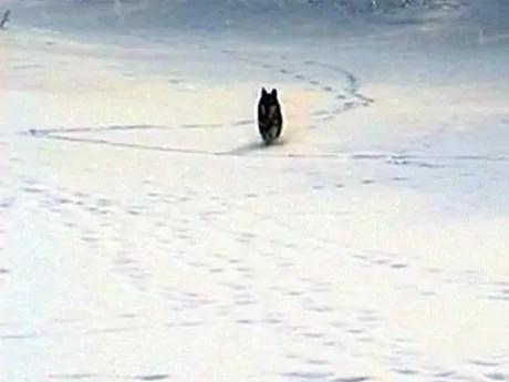 wilki - ciekawe teksty po roosyjsku