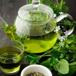 Chá Verde - Camellia Sinensis