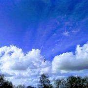 innovation birds sky fly blue trees cloud park london innovation learning cultures rotana ty
