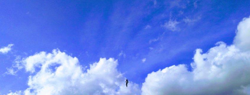 innover innovation birds sky fly blue trees cloud park london innovation learning cultures rotana ty