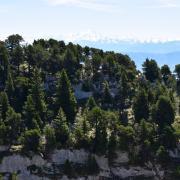 2019 insights mountain tree jura landscape view learning leadership work community management insights rotana ty