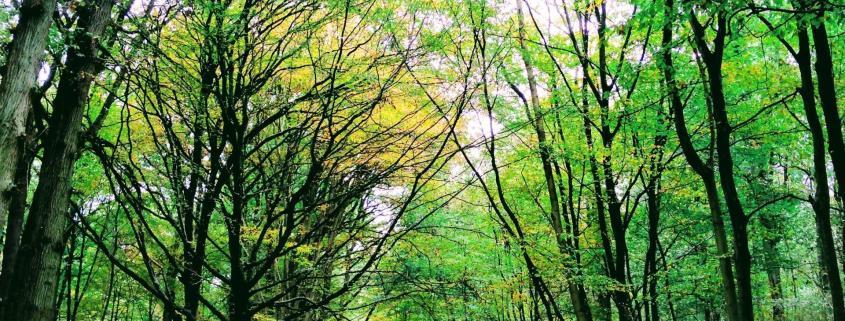 forest tree path autumn green development leadership rotana ty