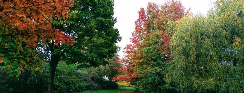 tree green autumn path explore leadership mastery rotana ty