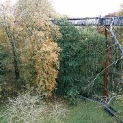 london park bridge autumn tree green community leadership creativity work change resilience rotana ty