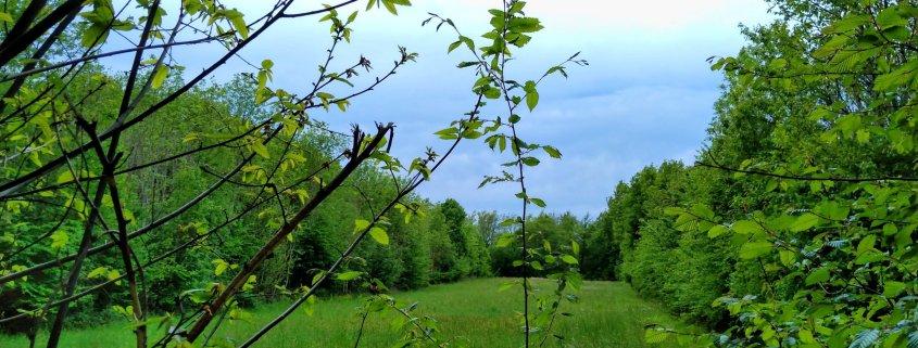 ingenuity innovation green grass trees landscape france countryside ingenuity innovation rotana ty