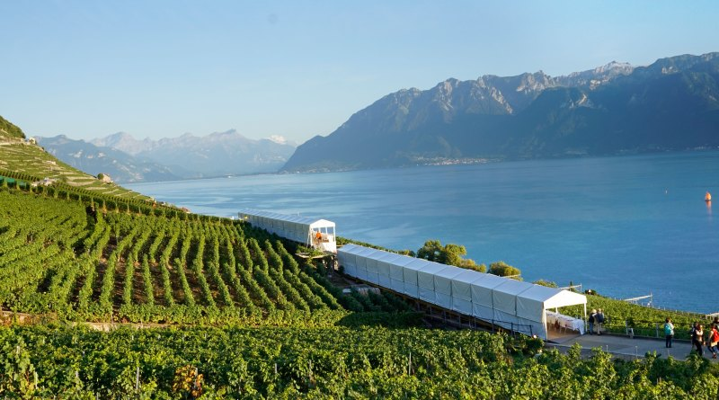 A makeshift boat-like tent in a vineyard on the banks of Lake Geneva.