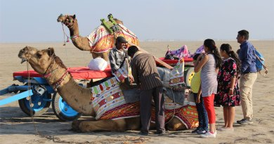 800_Camel-P