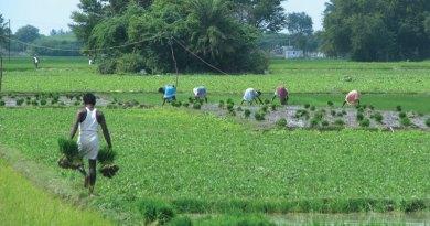 CSR-Farming-2