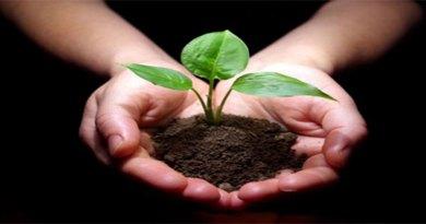 plant_5434