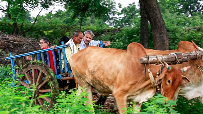 Mayank Gandhi riding on a bullock cart with a farmer.