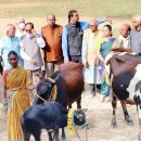 Women in rural Shimoga receive cows to boost their income