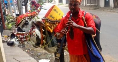 Narasimhan with his ox Gopalakrishnan.