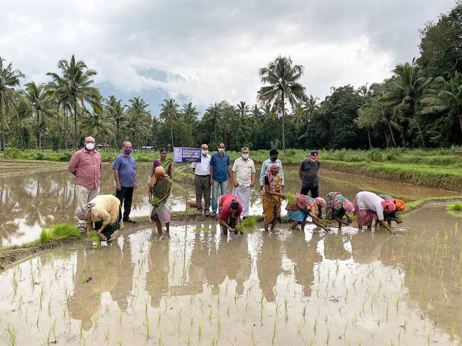 The club helped revive paddy cultivation in Belthangady.