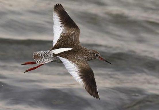 Resultado de imagen para alto golfo de california animales