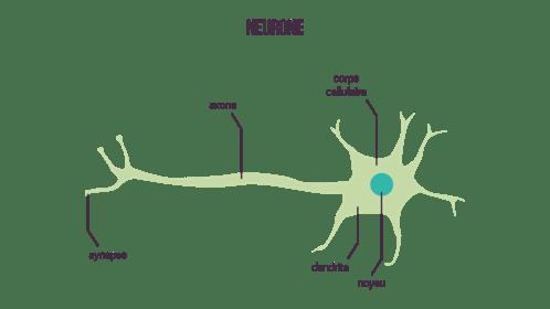 neurone informel