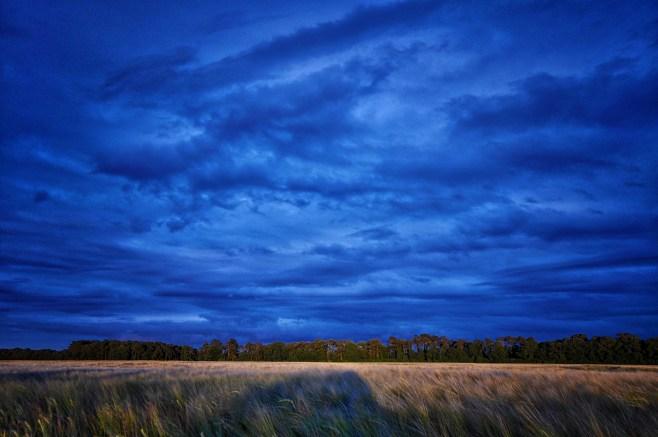 Big Sky Country Oak Park