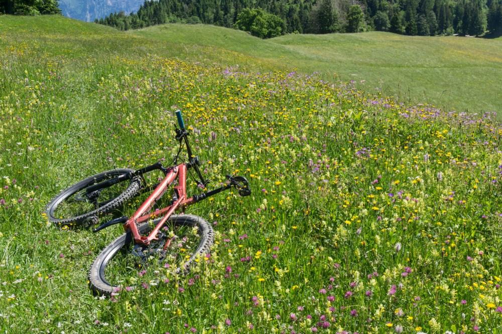 Sommerwiesen-Trail