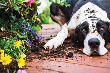Separation Anxiety Negatively Impacts Quality of Life - Destroying garden