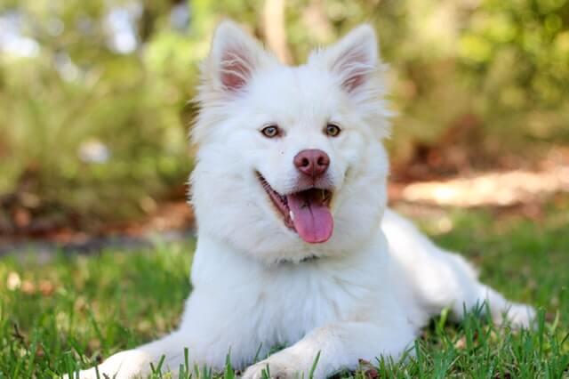 Best White Dog Names- Have The Best one For Your Puppy
