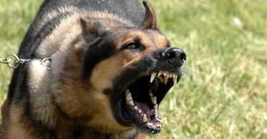 Why Dogs Bark-Stop Excessive Barking In Dogs