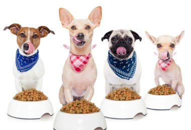 Healthy homemade food for your dog