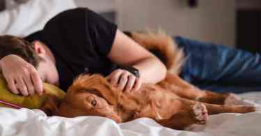 Dog Vital Signs That You Need To Know
