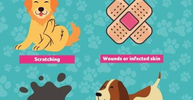 remove fleas from your dog