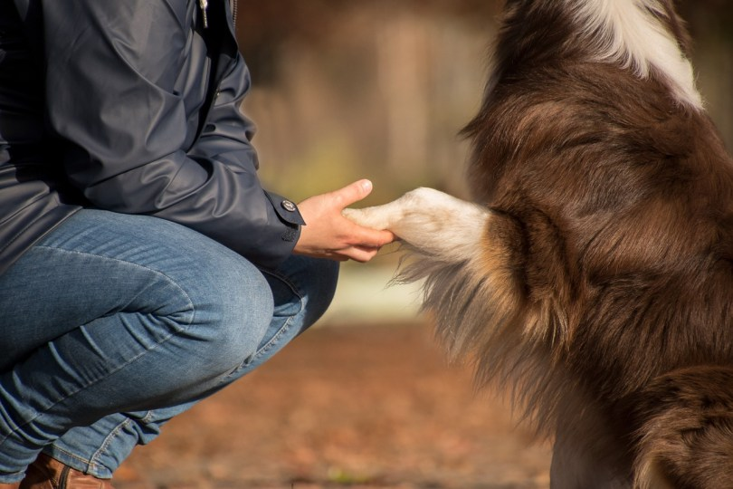 5 Mind-blowing And Hidden Facts About Dogs You Did Not Know