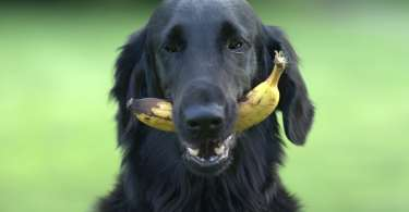 Fruits and Vegetables that are Safe for Dogs