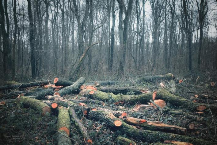 wood_france_tree_nature_ecology_forest_canon_landscape-422428.jpg!d.cleaned