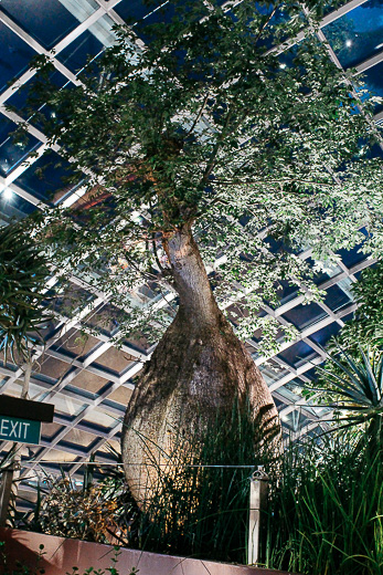 Flower Dome - Gardens by the Bay - Singapour