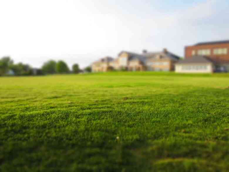 Green grass behind the house