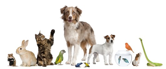 group-of-pets-together-15229056