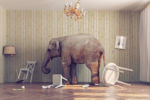 elephant-abley (1)