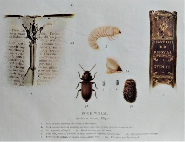 BQR-Vol.-1-No.-12-1916-Bookworm