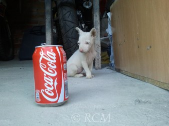 I could get that can. I'm sure I could attack it
