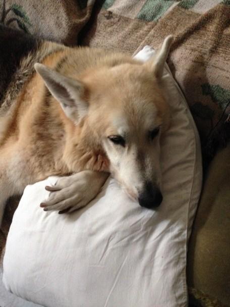 Hibernating Pippadog