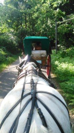 calèche, cheval