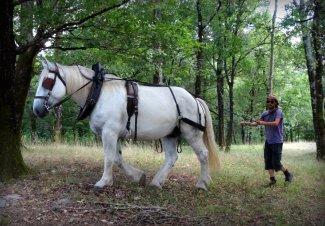 cheval, attelage