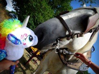 cheval, licorne