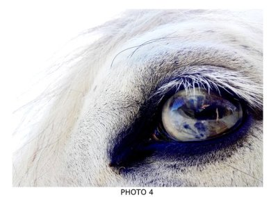 oeil, cheval, victor