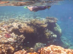 Fish and coral, Great Barrier Reef