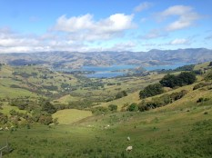 Lookout across Otago Peninsula