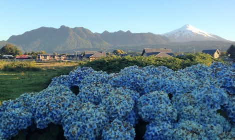 View of the volcano over the gorgeous flowers in the backyard of our hostel