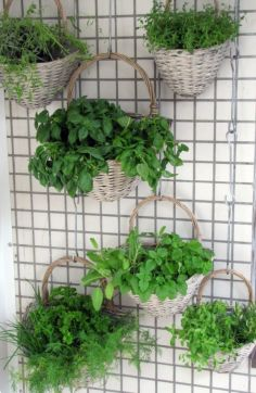 Incredible indoor hanging herb garden (19)