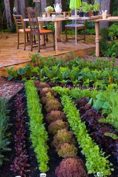 Affordable backyard vegetable garden designs ideas 09