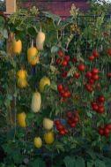 Affordable backyard vegetable garden designs ideas 36
