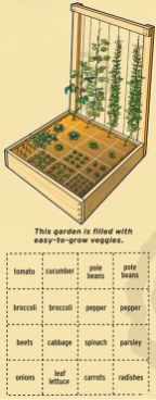 Affordable backyard vegetable garden designs ideas 54